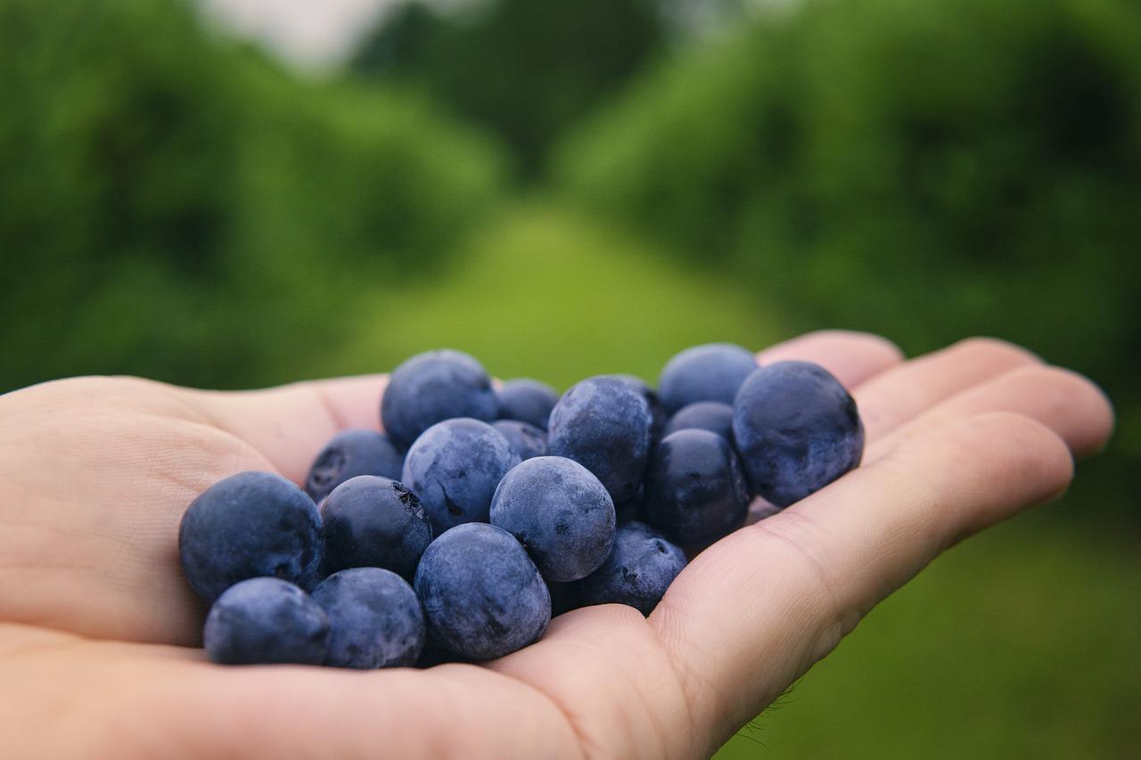 owoce do pracy - jakie owoce jeść codziennie?